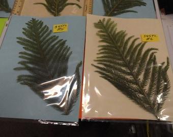 Choose your Norfolk Pine Pressed and Preserved in Alaska 345 FL