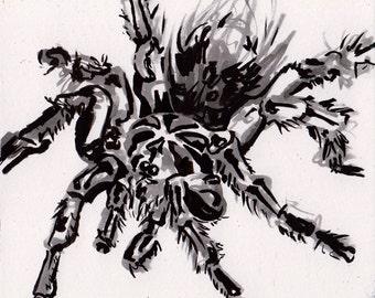 Tarantula Drawing - Ink Painting of a Spider - Black Tarantula Art - Original Inktober Art by Jen Tracy