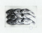Little Fishes - Pencil Drawing