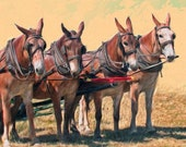 MULES -Four Mules Draft Team pictured  on ONE 16 inch Square Fabric Panel to Sew