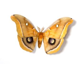 "Polyphemus 4.25"" Papercut Moth Decoration"