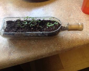 Wine BOttle planter! Sliced wine bottle! Cool