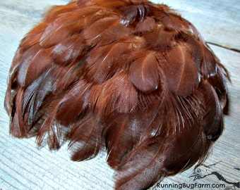 "Real Feathers Natural Cruelty Free Bird Feathers Red Chicken Plumage Rhode Island Red Rooster Feathers For Crafts USA 30 @ 1.5 - 2.5"" / RIR9"