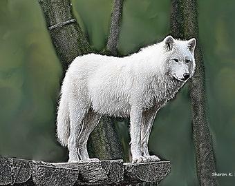 White Wolf Art, Digital Painting, Native American Totem Animal, Southwestern Home Decor, Wolves Decorative Artwork, 8 x 10, Giclee Print