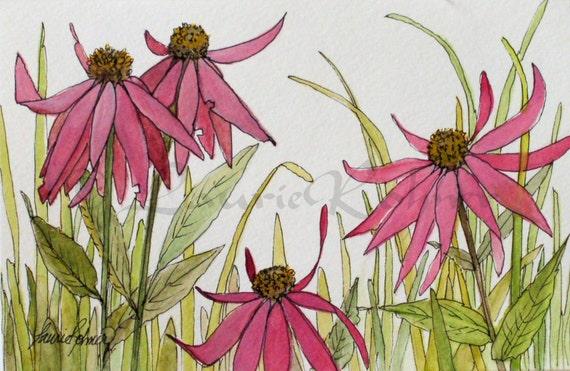 Watercolor Pink Coneflower Original Botanical Art Garden Flowers