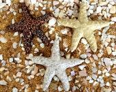 3 Starfish Tiles