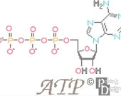 ATP Molecule Cross Stitch Pattern PDF