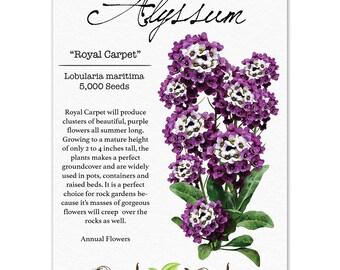 Alyssum Seeds, Royal Carpet (Lobularia maritima) Open Pollinated Seeds by Seed Needs