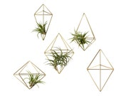 Set of 5 | SOPHI | Wall Sconce Collection No.1 | Air Plant Hanger | Himmeli