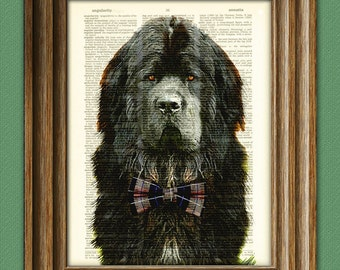 The Newfie is ready for his closeup Newfoundland dog with a tie beautifully upcycled vintage dictionary page book art print