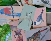 Vintage 1960s Box of Bird Flash Cards