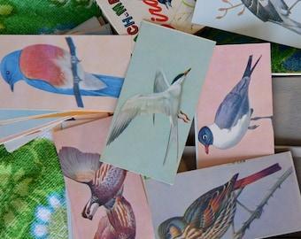 Vintage 1960s Box of Bird Flash Cards
