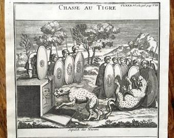 1722 tiger hunting original antique african animal engraving print