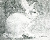 Bunny Rabbit Original Pencil Sketch - 4 x 6 Art for Sale