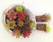 Custom order  For Dyer, 30 Succulent Plants