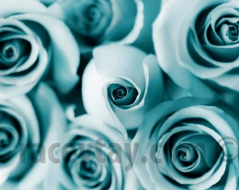 Roses, Teal Wall Art, Flower Photography, Blue Flowers, Blue Rose, Teal Decor, Flower Wall Art