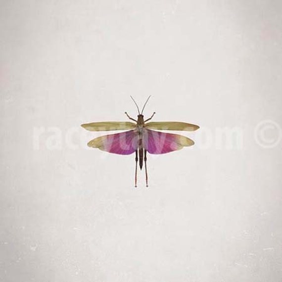 Insect Print, Garden Bug, Oddity Photography, Pink, Green, Nature Photography, Insect Photos, Neutral, Specimen