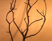 Manzanita Jewelry / Wish / Decor / Centerpiece Tree - Hammered Dark Bronze Metallic - Ready to Ship