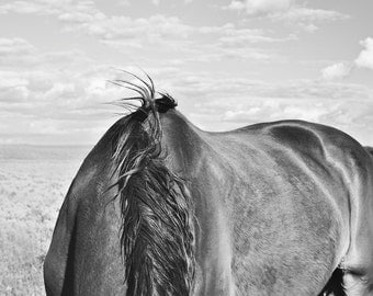 Modern Horse Photography, Western Art, Black and White