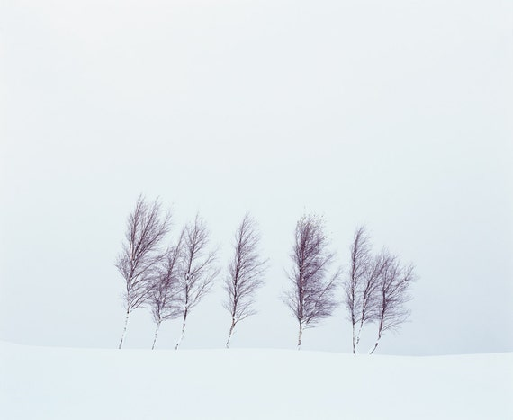 tree photography, winter photography, fine art photography, large wall art, large photography print, home decor, office decor, minimalist