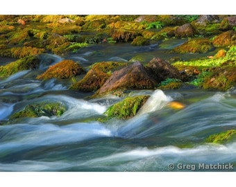 Fine Art Color Nature Photography of Welch Spring in Missouri Ozarks
