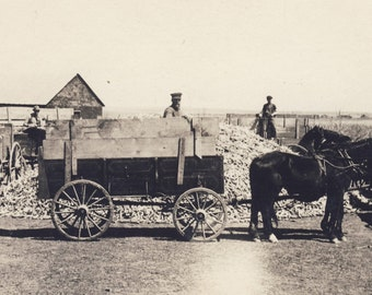 Horse Drawn WAGON LOADING CORN Photo Postcard circa 1910