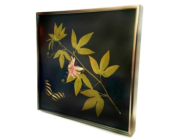 Passionflower and Zebra Longwing Butterfly Preserved Taxidermy Art