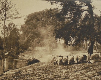 Gascony Countryside, France - Unused Postcard