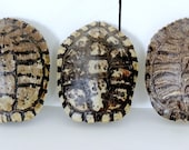 VINTAGE Turtle Shell Natural Curiosity Cabinet Fossil Rustic Decor Man Cave