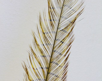 Millinery Feathers - Burnt Pheasant Feather  - Gold