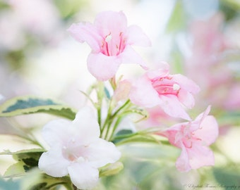 Pink Weigela FLOWER Photography, NATURE Art, GARDEN Print, Macro, Colorful, Pink, Pastel, Spring,