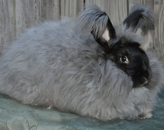 Silvery Black German Angora Rabbit Wool Spinning Felting fiber 100% Angora Prime Fiber Bunny Wool