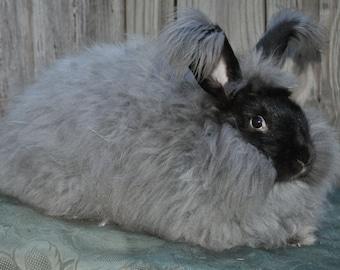 Silvery Black German Angora Rabbit Wool Spinning Felting fiber 100% Angora Prime Fiber Bunny Wool