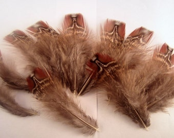 Natural Tragopan Pheasant  feathers brown LG  10 craft feathers