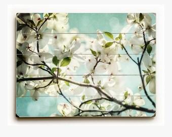 Wood Sign: Aqua Dogwood Wood Plank, White Flower Art, Pastel Blue Decor, Dogwood Photograph.