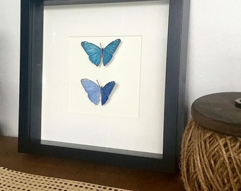 Hand Drawn Paper Vegan 'Taxidermy' Blue Butterflies