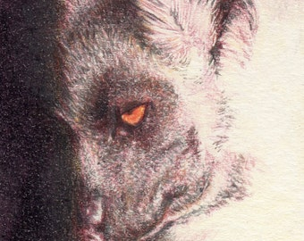 "Original ACEO - Lemur - 2.5"" x 3.5"" Unique Artwork - Free Shipping - Portion of Proceeds to Charity"
