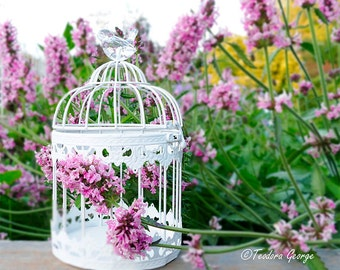 Shabby Chic Bird House Garden Photography, Botanical Photography, Garden Photography, Flower Photography, Pink Flowers