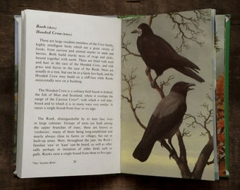 Ladybird Book of Heath and Woodland Birds by John Leigh - Pemberton