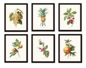 Antique Fruit Prints Set No. 2 - Redoute Fruit Prints - Gallery Wall Art - Giclee Canvas Prints - Print Sets - Botanical Prints - Canvas Art