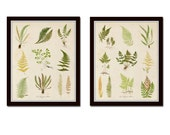 Vintage Fern Prints, Fern Collage No. 1 and No. 2, Giclee, Art, Prints, Large Art Prints, Botanical Prints,Vintage Botanical, Illustration