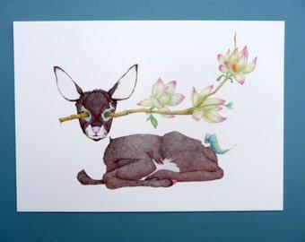 Fawn, postcard