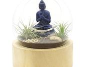 Buddha Orbit Terrarium