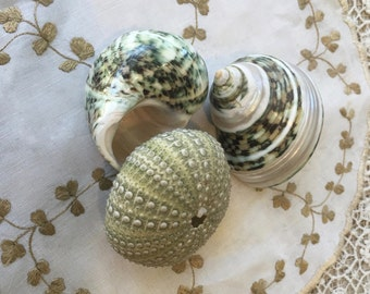 3 Pretty Seashells with Mossy Green Colors