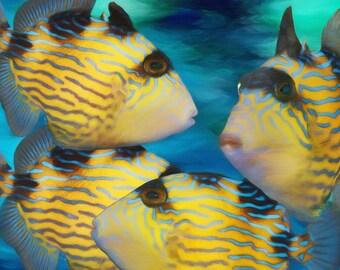 TROPICAL FISH, Blue Line Triggerfish, Nautical, Beach Decor, Coastal Style, Marine, Fish Art Print, Ocean Art, Coastal, Available on Canvas