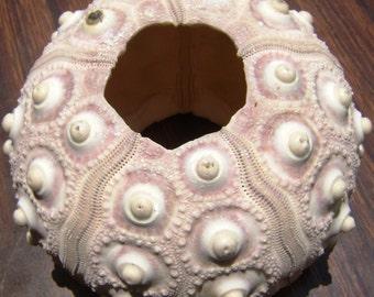 Sputnik Sea Urchin Shells Large (3 pcs.)