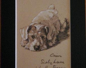 SEALYHAM TERRIER DOG Vintage mounted 1935 Cecil Aldin Sealyham terrier looking forward dog plate print Unique Christmas Thanksgiving gift