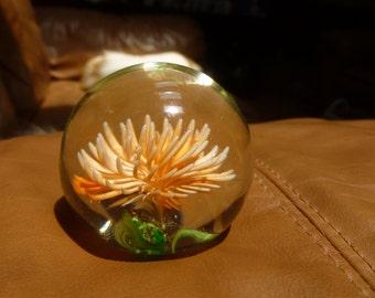 Sea Anemone paperweight globe