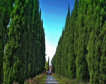 Trees at Greystone mansion LA