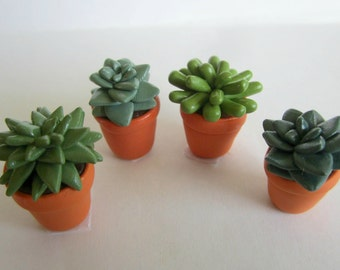 Tiny Succulent in Pot Sculpture (Great for Terrariums)